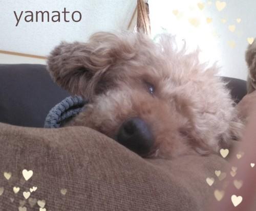 PicsArt_03-09-01.10.35