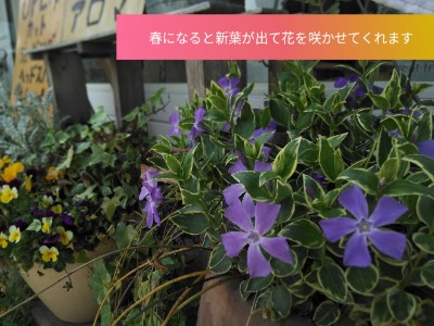 PicsArt_04-07-01.44.06