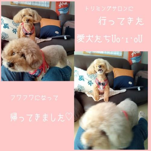 PicsArt_06-22-07.42.10