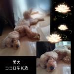 PicsArt_08-19-07.34.15