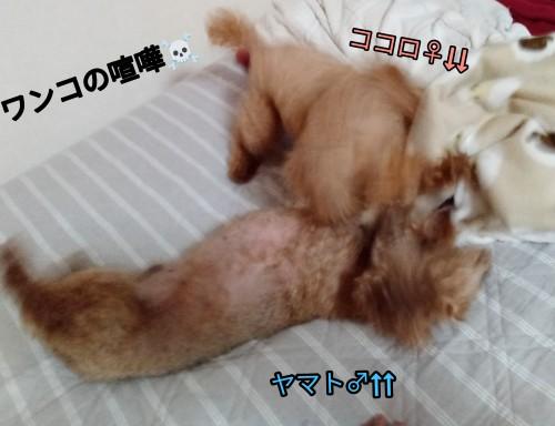 PicsArt_09-08-08.37.07
